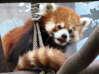 東武動物公園&夢見ヶ崎動物公園 暑かった東武・・・早く良くなって欲しいチヒロさんの床ずれ  のんびり夢見は平常運転でした
