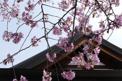 春の軽井沢♪ Vol.2:旧軽井沢 新宮寺の桜♪