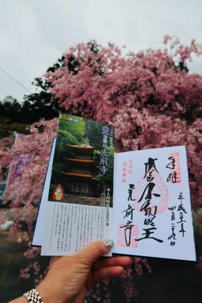 2019年4月 日帰りバスツアーで行く駒ケ根満腹旅♪~「光前寺」で平成最後の桜~牛しゃぶ豚しゃぶ食べ放題~