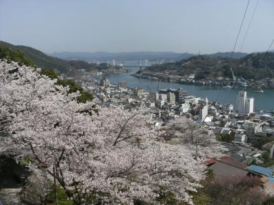 尾道・千光寺公園の桜