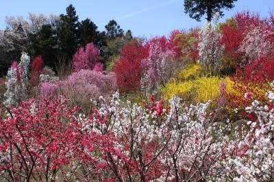 ◆極彩色の花曼荼羅~山森沢・桃源の里 Part2 & 蝦夷蒲公英