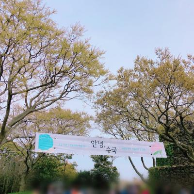 済州島 ~カメリアヒル~