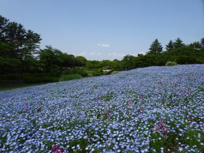 2019年5月 大型連休後半は安近短! 昭和記念公園で花めぐり