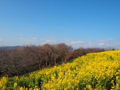 平塚ドライブ(高麗山公園、吾妻山公園)