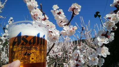 2019春の信州そば祭りwithあんずの花と温泉と