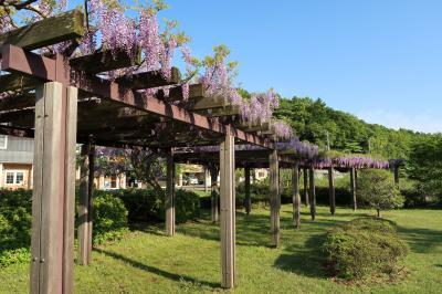 令和になり初の引地川親水公園(神奈川県藤沢市)へ行ってきました・・・