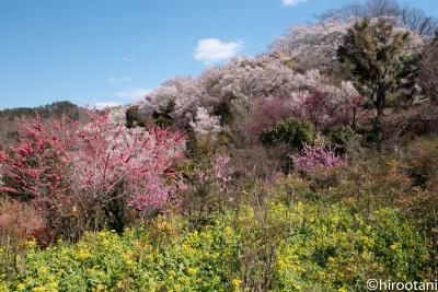 南東北桜5スポット撮影旅行 【1】花見山公園