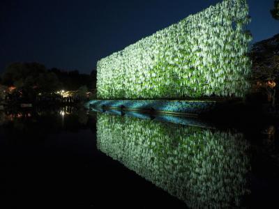 夜空をつつむ藤のオーロラ あしかがフラワーパークライトアップ