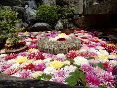 GW最終日  花と癒しを求めて「岡寺」 ~華の池~水面に浮かぶダリア~