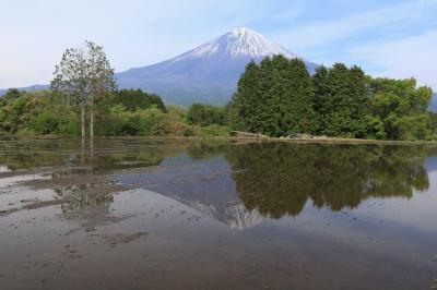 令和初旅は、茶摘み娘と富士山のはずだったのに、大渋滞で残念!&豊田市つどいの丘のつつじ♪