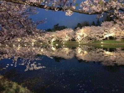 GW2019 東北10日間温泉巡りの旅 その3 弘前の桜ライトアップ