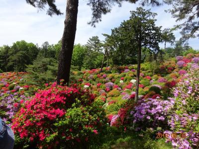 つつじが満開の塩船観音寺とネモフィラが見ごろの昭和記念公園