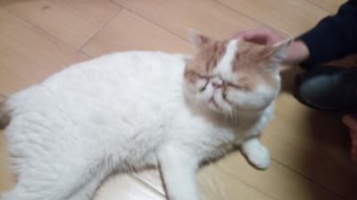 地歩に無い中国旅行016:猫カフェ?脱出ゲーム?:上海・虹橋ー01