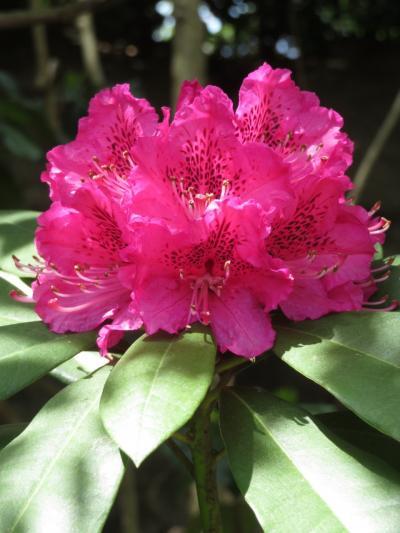 春のよこはまズーラシア~飼育の日と20周年の間の週末(1)春花あふれるズーラシアと楽しいオブジェと園内で崎陽軒のシュウマイ弁当ランチ