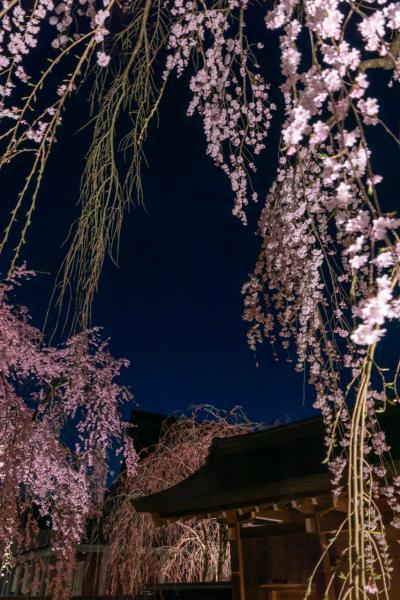 初春の旅 秋田(前編)_角館の桜
