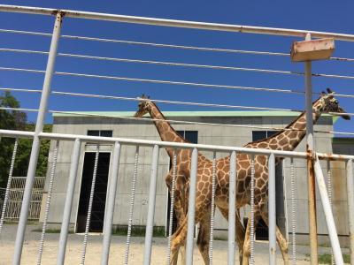 九十九島植物動物園 きりん大好き