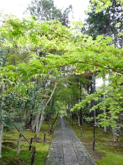 いつ行っても楽しい京都・奉祝令和元日①  広隆寺・鹿王院・嵐山・御金神社