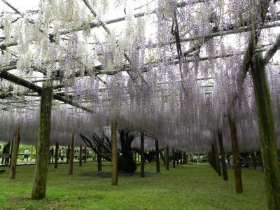念願の『河内藤園』へ◆平成から令和をまたぐ北九州&日田の旅《その2》
