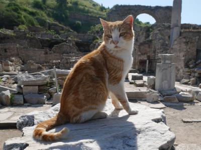エーゲ海地方で温泉・遺跡・海の旅 Part 2~コウノトリの街セルチュク&猫の街エフェスで遺跡編~