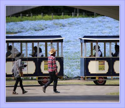 Solitary Journey[1987]春うららかな♪青空と丘一面に咲く青いネモフィラの花はまさしく絶景!<備北丘陵公園>/広島県庄原市