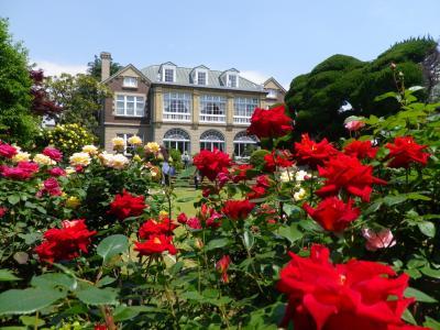 2019春の鳩山会館でバラを愛でる