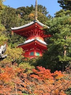 秋のしっとり京都 泉涌寺から今熊野観音寺へ