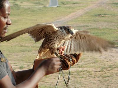 ドバイ旅行6 リッツの敷地には野生動物がいっぱい