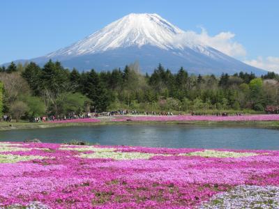青空と富士山と芝桜の絶景 2019/5/8