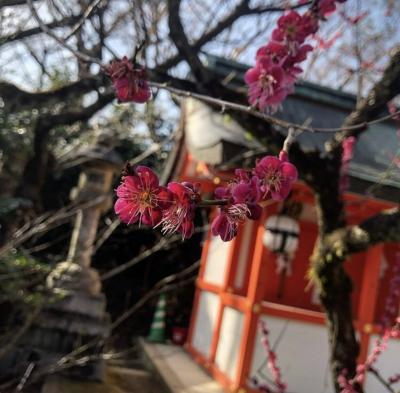 急遽決まった京都一人旅