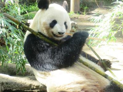 令和初旅行!パンダとホテルライフの東京2泊3日の旅♪その1