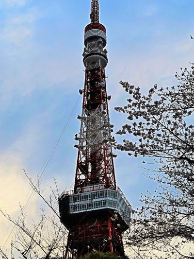 都内桜名所16 東京タワー 増上寺の裏手にそびえ ☆聖観世音菩薩像など供養塔も