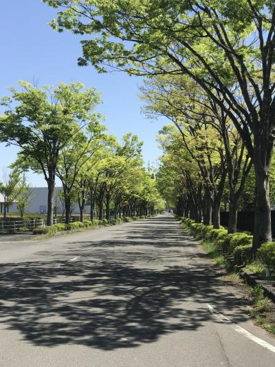 福島の並木道