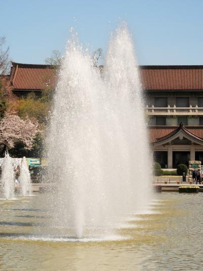 東博-1 上野恩賜公園 さくら 花見ごろ ☆「博物館でお花見を」企画展を開催