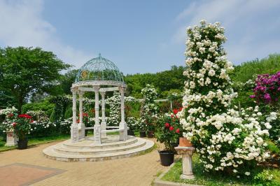 京成バラ園 優秀庭園賞に輝いた世界に誇れるバラ園