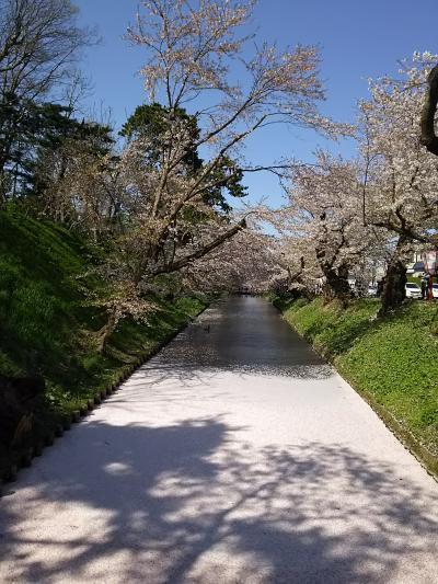 東北 桜の旅