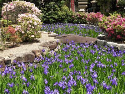 こうべ花の名所「多聞寺のかきつばた」