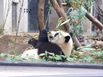 シャンシャンを見たい人のための 上野動物園攻略法