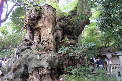 来宮神社の大楠に会いに 思い出をフレームにおさめる熱海フォトジェニック散策