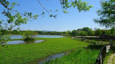 昆陽池公園の散策 上巻。