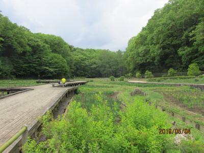 東青梅、塩船観音ハイキング(3)吹上菖蒲園を経て塩船観音寺へ。