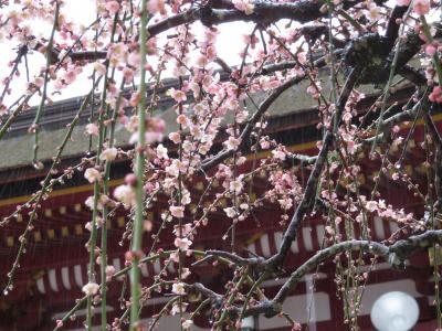 日本航空で行く!日帰り春の福岡・太宰府天満宮と柳川うなぎ日帰り旅