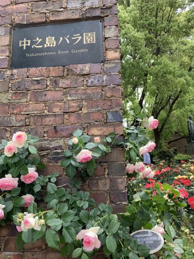 【薔薇の季節♪に心惹かれて】満開の中之島バラ園2019 ①