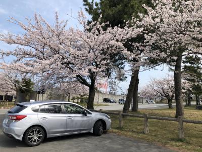 2019花見ー01