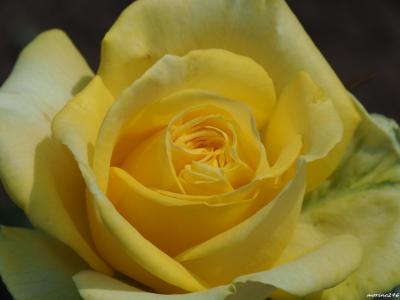 2019春バラの香りに包まれて(その2)@神代植物公園