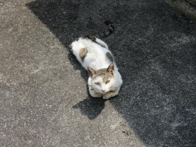猫探し【沖縄(粟国島・Aguni Is.)編】その-1