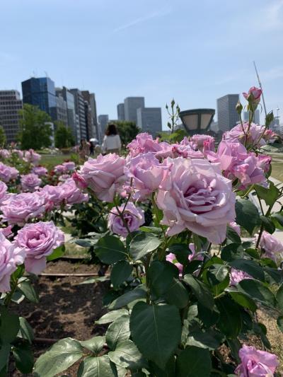 【薔薇の季節♪に心惹かれて】満開の中之島バラ園 2019 ②