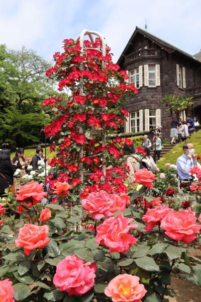 東京都心のバラ園・・大正の息吹を今に伝える、旧古河庭園をめぐります。