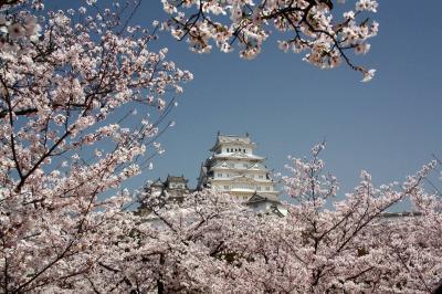 天下の名城 姫路城で花見。