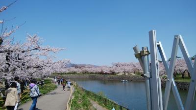 ゴールデンウィーク 桜