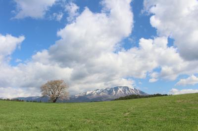 小岩井農場の一本桜のリベンジと、北山崎の景観と、あまちゃんロケ地、最後にハイジのような景色が見れました。